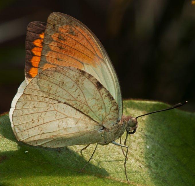 Schmetterling Test