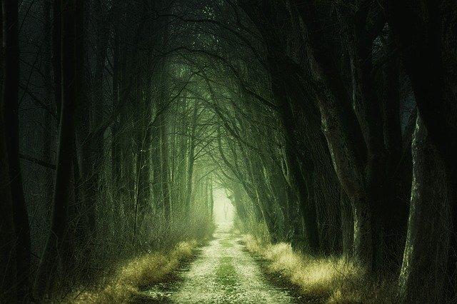 Secret Forest Path